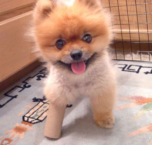 Really cute puppy dog pictures 2