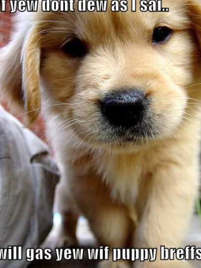 cute puppies and dogs. Cute puppies pictures and
