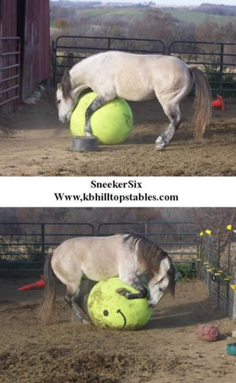 Really funny pictures of horses pictures 1