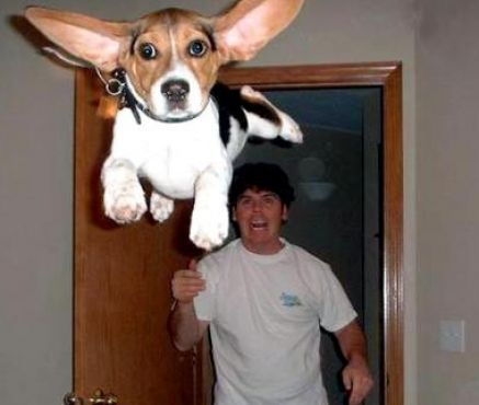 Really really funny animal pictures 3