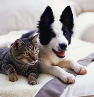 Smiling cat and dog pictures 3 Smiling Dog And Cat