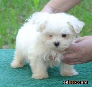 Very cute baby puppies pictures 4
