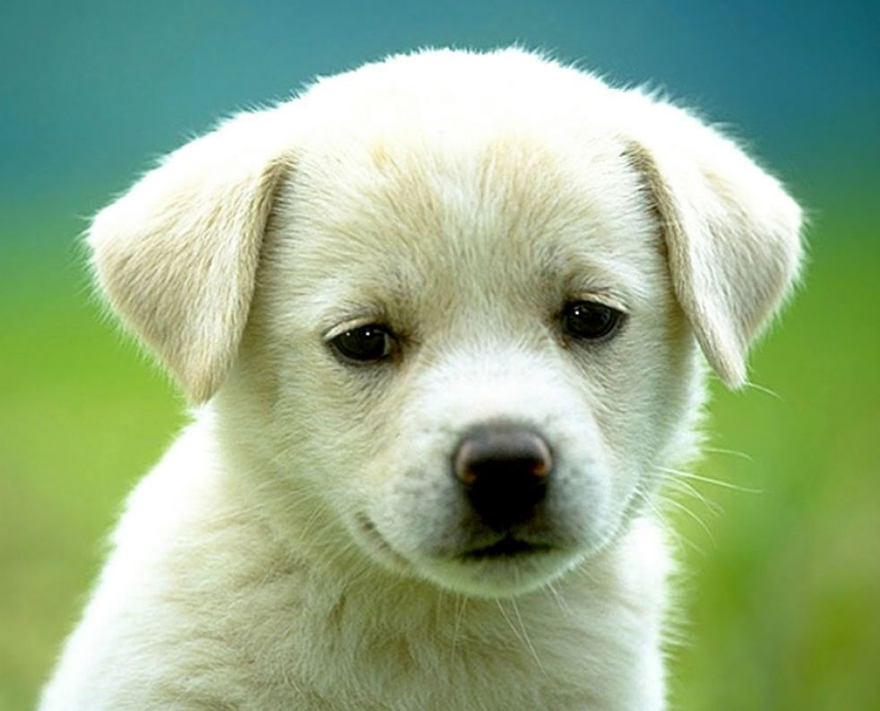 cute puppies wallpaper. Very cute puppies wallpaper.