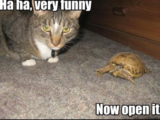 Pics Photos - Very Funny Cats With Captions Very Funny Dogs And Cats
