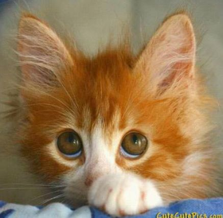 Very very cute baby animals pictures 2